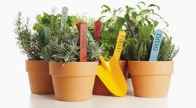 Καλλιέργεια μυρωδικών για την κουζίνα